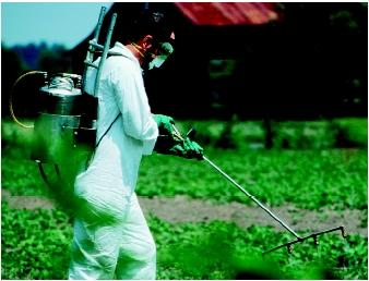 A worker wearing protective clothing is spraying crops with pesticides. (U.S. EPA. Reproduced by permission.)