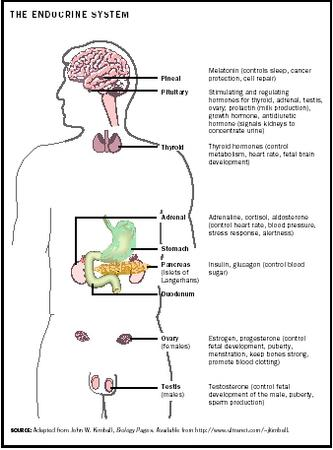 The Endocrine System.